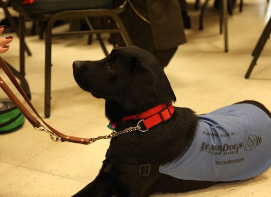 A Guide dog in training was brought to the meeting.