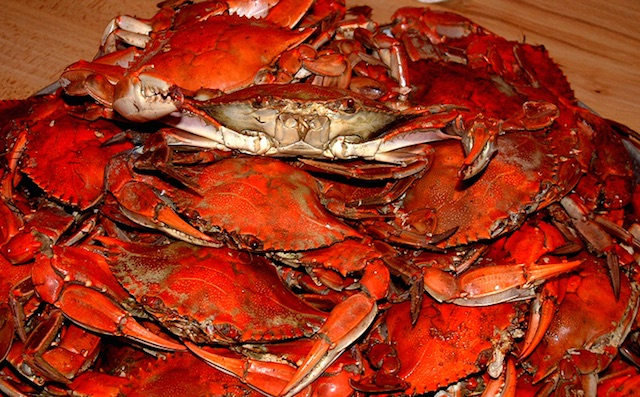 A pile of bright red steamed chesapeake bay crabs